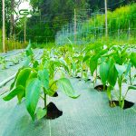 What else can the grass-proof cloth do in addition to preventing weeds?